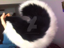 Black Husky Tail - For Sale by Kyla-Nadie