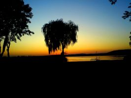 willow sunset. by bKKa619