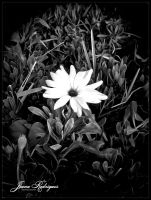 White Flower Blossom by lady-erzsebet