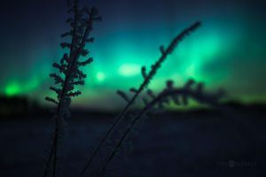 Frost And Auroras by Nitrok