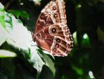Butterfly by 66Lilith66