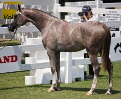 STOCK - Equitana 2013-251 by fillyrox