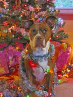 Merry Christmas Pitbull by PittyLova