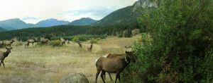 Rocky Mountain Deer V by patrick-brian