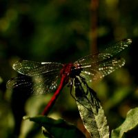 Odonata by dragon-fly-to-me