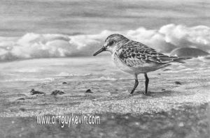 Sanderling in the Surf by deviant-art-guy