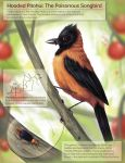 Hooded Pitohui: Poisonous Bird by stanleyillustration