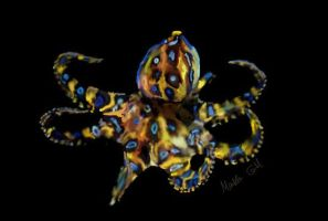 Southern Blue-Ringed Octopus by Gottheart