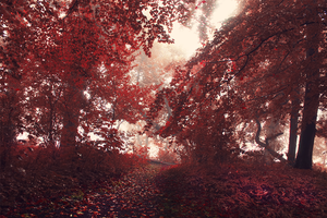 Red fantasy by cs4pro