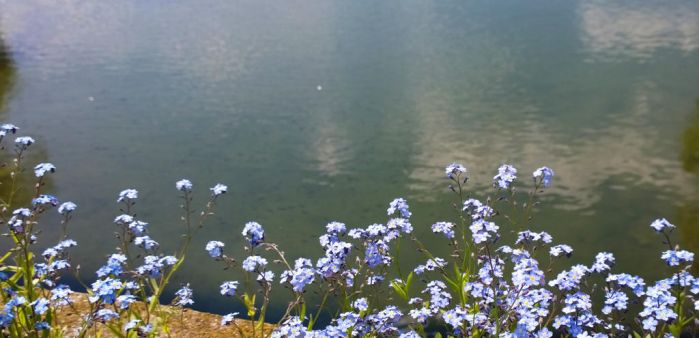 Water and flowers by CORinAZONe