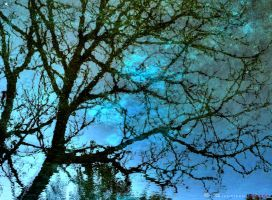 tree's reflection by gianf
