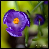 Heart of Gladness I by tleach0608