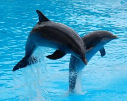 Jumping Dolphins 820733 by StockProject1