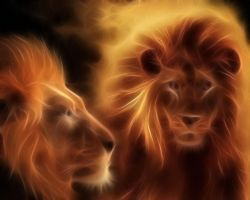 Lions Of Fire by manoluv