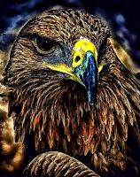 The Aguila by RiegersArtistry