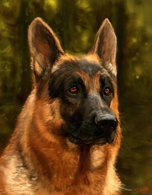 German Shephard by james-olley