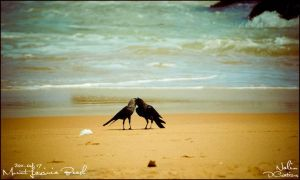 Crows in love by CrazyNalin