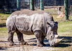 Rhino by 904PhotoPhactory