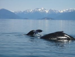 Whales by LoverOfEveryone3133