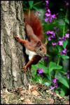 Squirrel..... by Bloody-chan