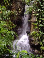 Climatron falls, before by gamergoth