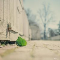The Leaf IV by JCNProductions