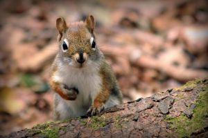 Squirrel by PascalsPhotography