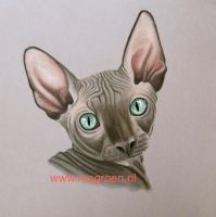 Pastel drawing Sphynx kitten by mo62