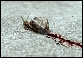 Bloody Snail by Katro16