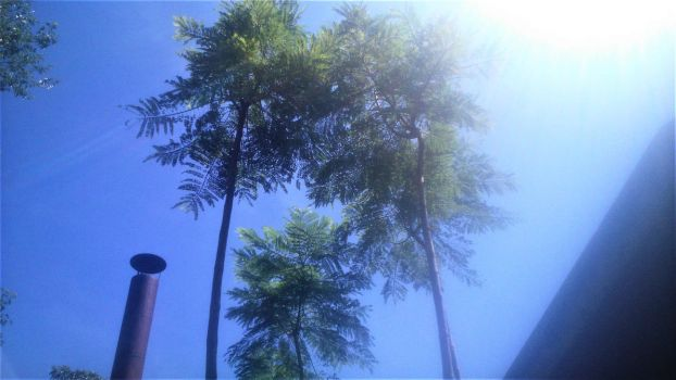 Tall Trees. by Argenx