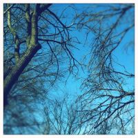 Branches by like-a-seahorse