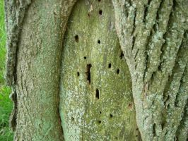 Tree-door 10 by group-stock