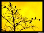 Crows: Yellow Sunset by Cooby
