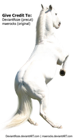 Lipizzan 6 By Maerocks (Precut) by DeviantRoze