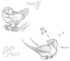 Pokemon birds