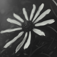 Grayscale Flower by Gekigengar