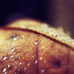 A Golden Drop by Schnitzelyne