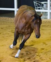 STOCK - 2014 Total Equine Expo-114 by fillyrox