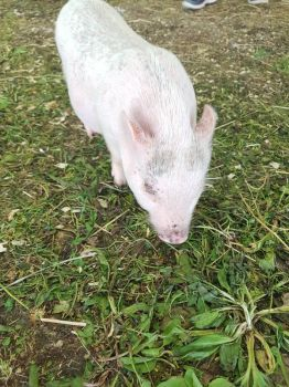 Little pig by MyLoveForYouEternity