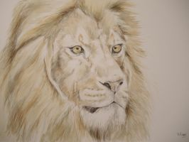 Lion by Helenr251
