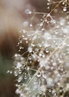 pearly morning by EvaShoots