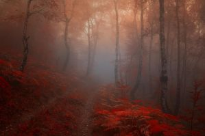 -Road into my heart- by Janek-Sedlar