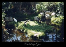 SanDiego Zoo by raverqueenage