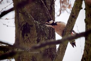 On the Lookout by OliverBPhotography