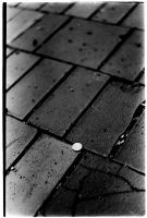 find a penny by orbatid