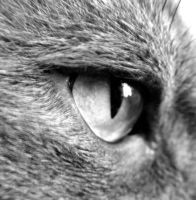 'Cats Eye' by ilovelucy365