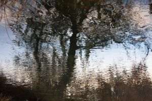 Water reflection by daily-telegraph