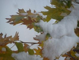 Leaves in the snow by kaylakerrigan