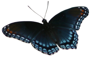 Red Spotted Purple Butterfly Precut Stock by Cowgirl-Kate