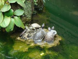 --Turtle Family-- by VixenRapture
